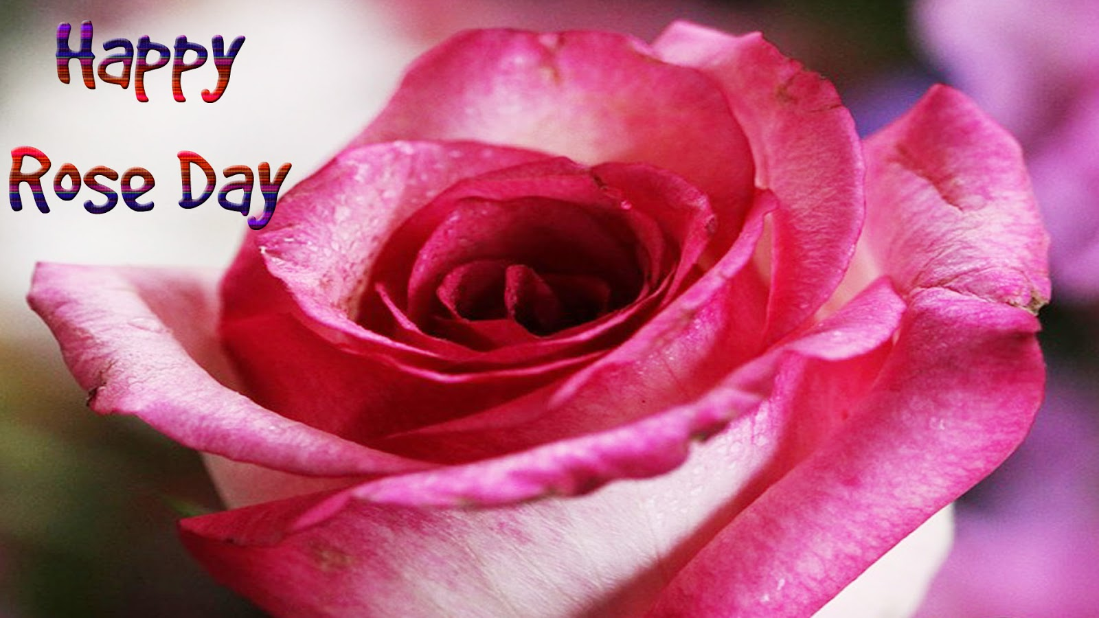 Happy Rose Day Wallpapers Pictures Photos In Hd Best Pic Rose