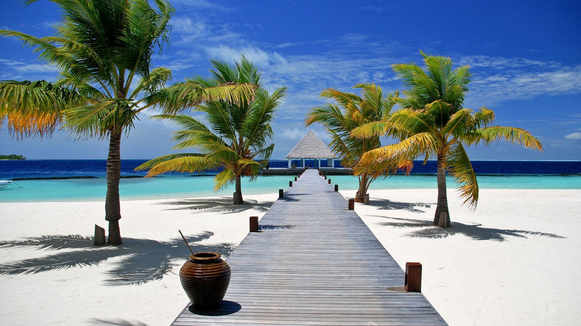 Karibik Wallpaper - Attalea Speciosa , HD Wallpaper & Backgrounds