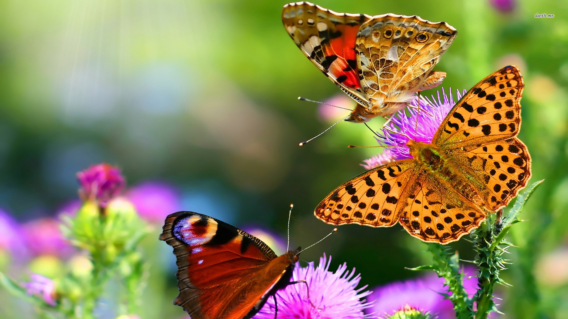 The Best Butterflies Live Wallpaper On Android - Butterfly Hd Wallpapers Free Download , HD Wallpaper & Backgrounds