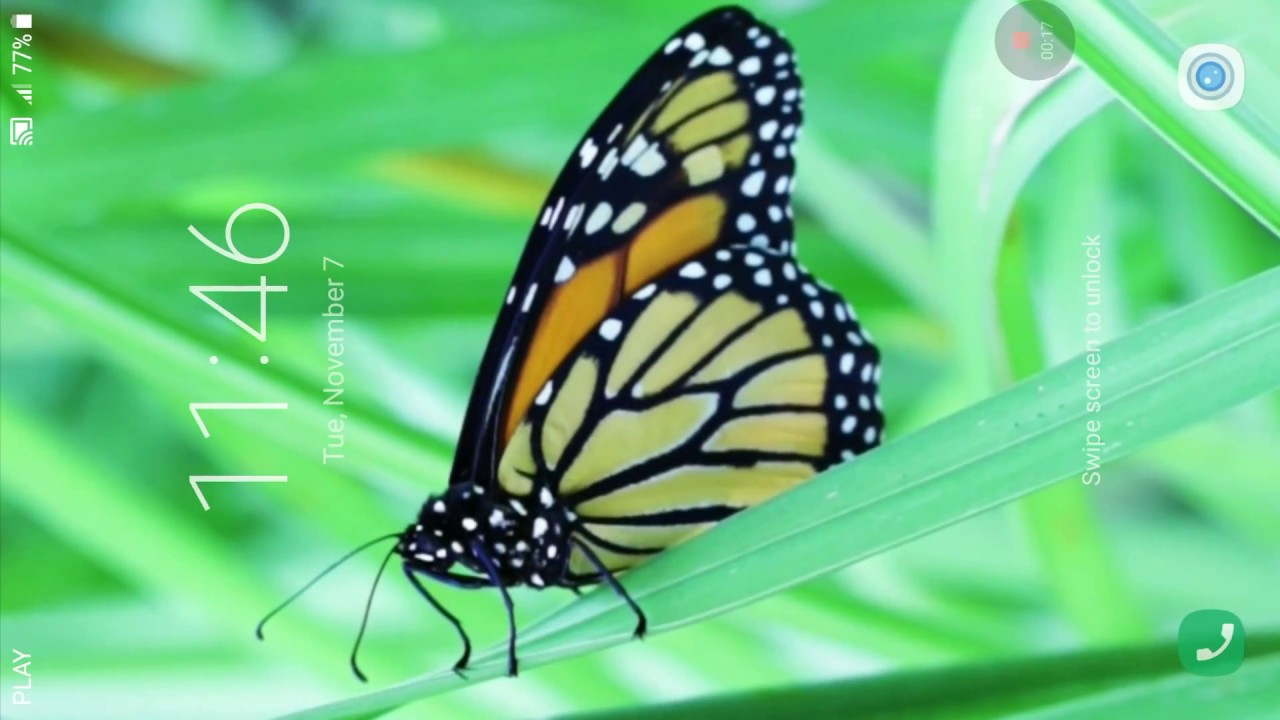 Butterfly Live Wallpaper - Monarch Butterfly , HD Wallpaper & Backgrounds