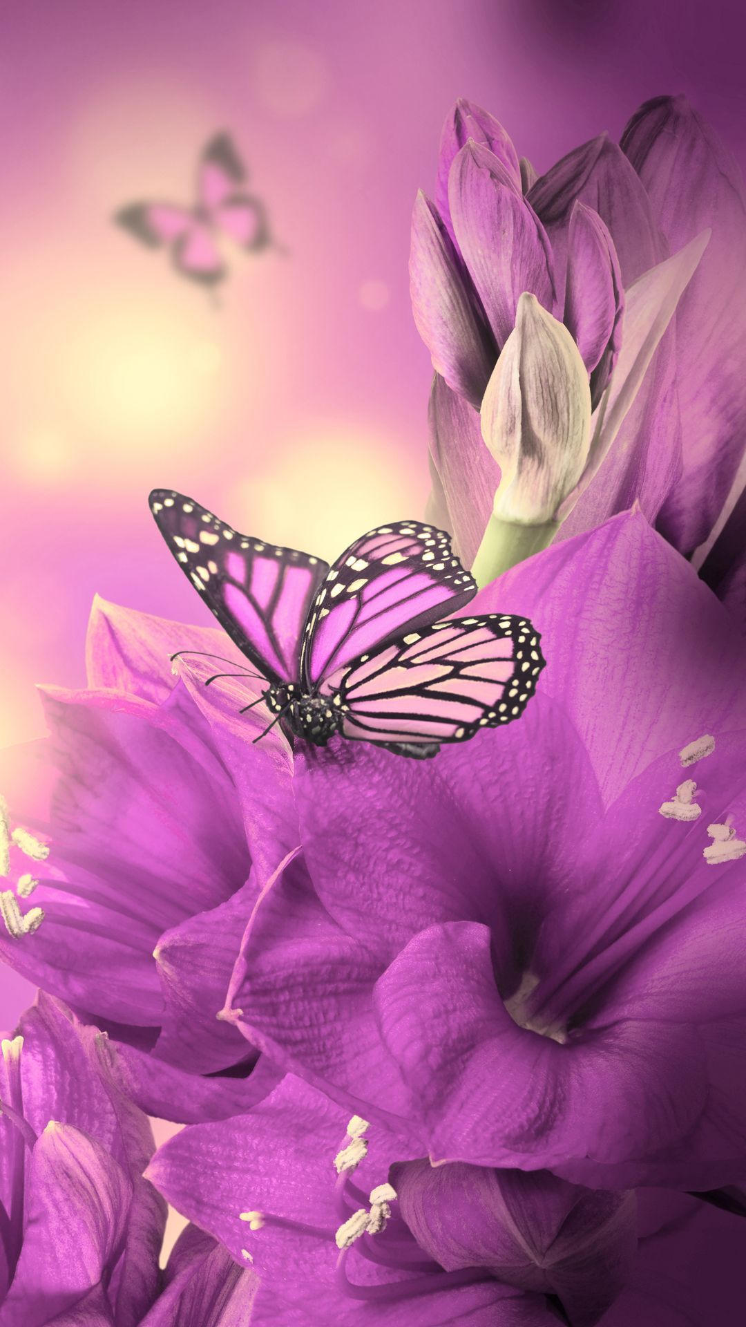 Download Wallpaper Iphone Butterfly 62493 Hd