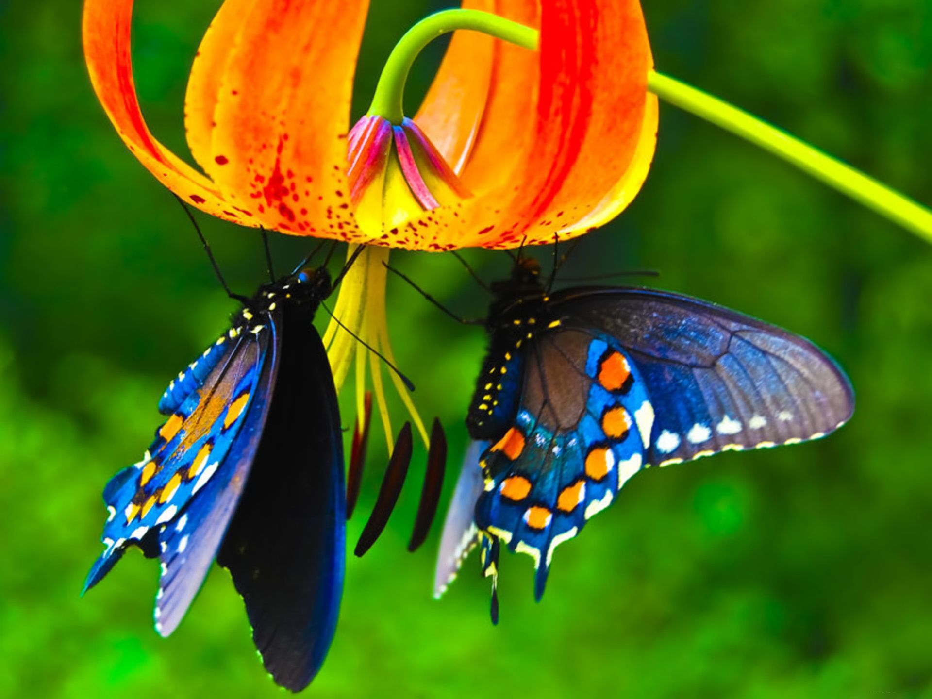 3d Butterfly Live Wallpaper 56 Wallpapers - Butterfly Images Download Hd , HD Wallpaper & Backgrounds