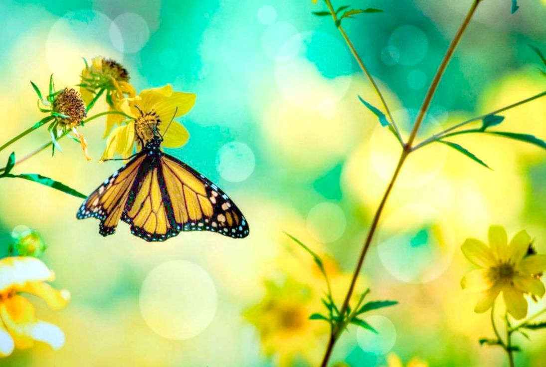 Spring Butterfly Live Wallpaper For Android Apk Download - Butterfly And Flower Cover , HD Wallpaper & Backgrounds