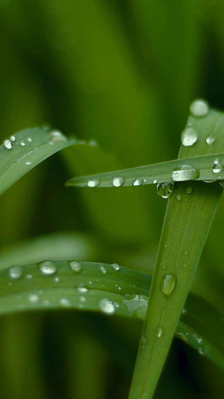 Hd 4k Wallpaper Macro Drops Green Green Nature