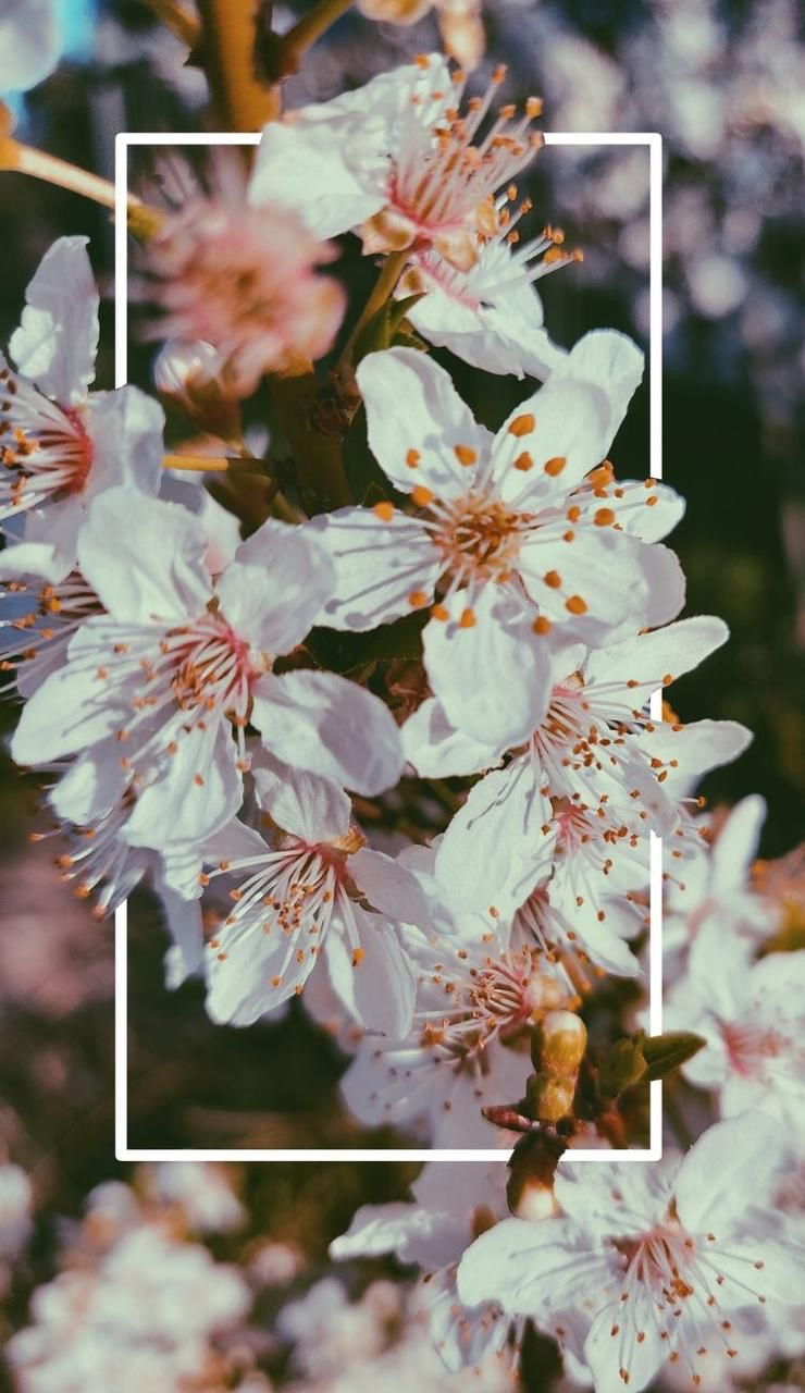 Floral Wallpapers For Iphone And Android Flower Android
