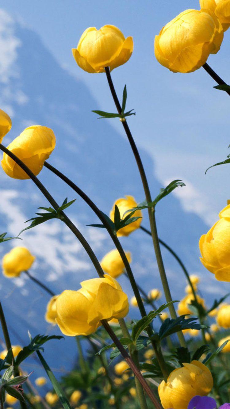Yellow Flower Wallpaper Iphone , HD Wallpaper & Backgrounds