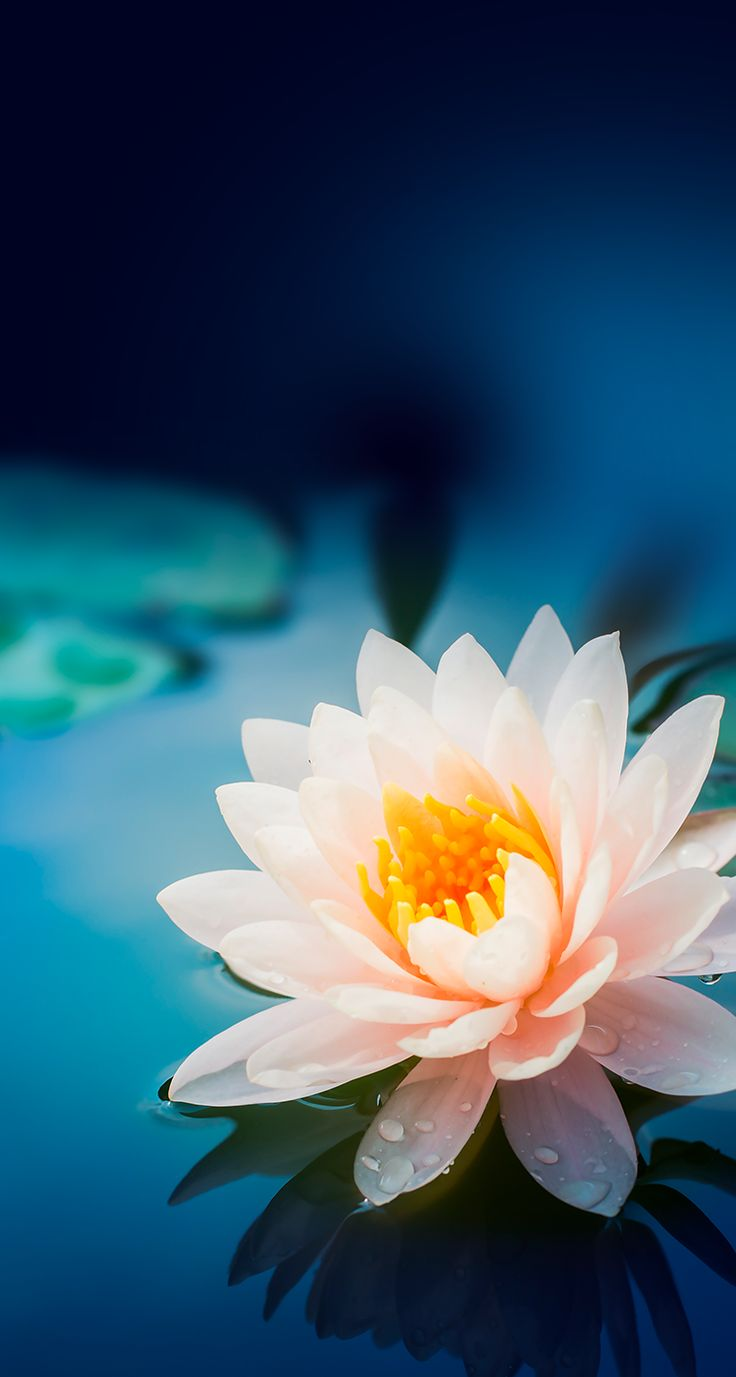 More Wallpaper Collections - Lotus Flower Iphone Background , HD Wallpaper & Backgrounds