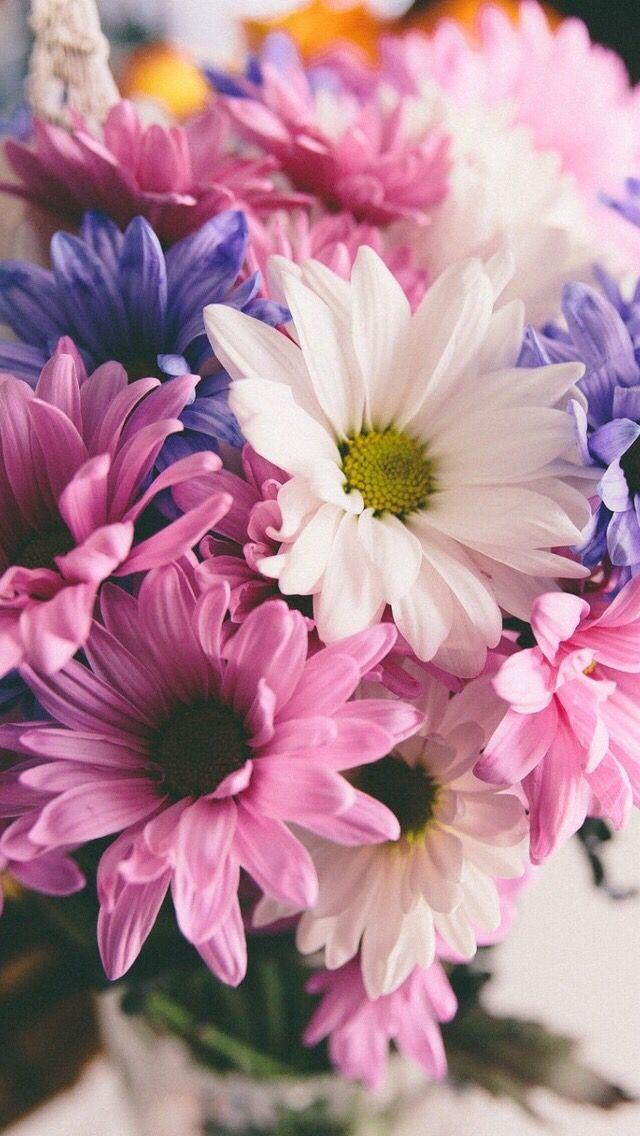 Iphone Flower Wallpaper - Beautiful Flower Wallpapers Iphone , HD Wallpaper & Backgrounds
