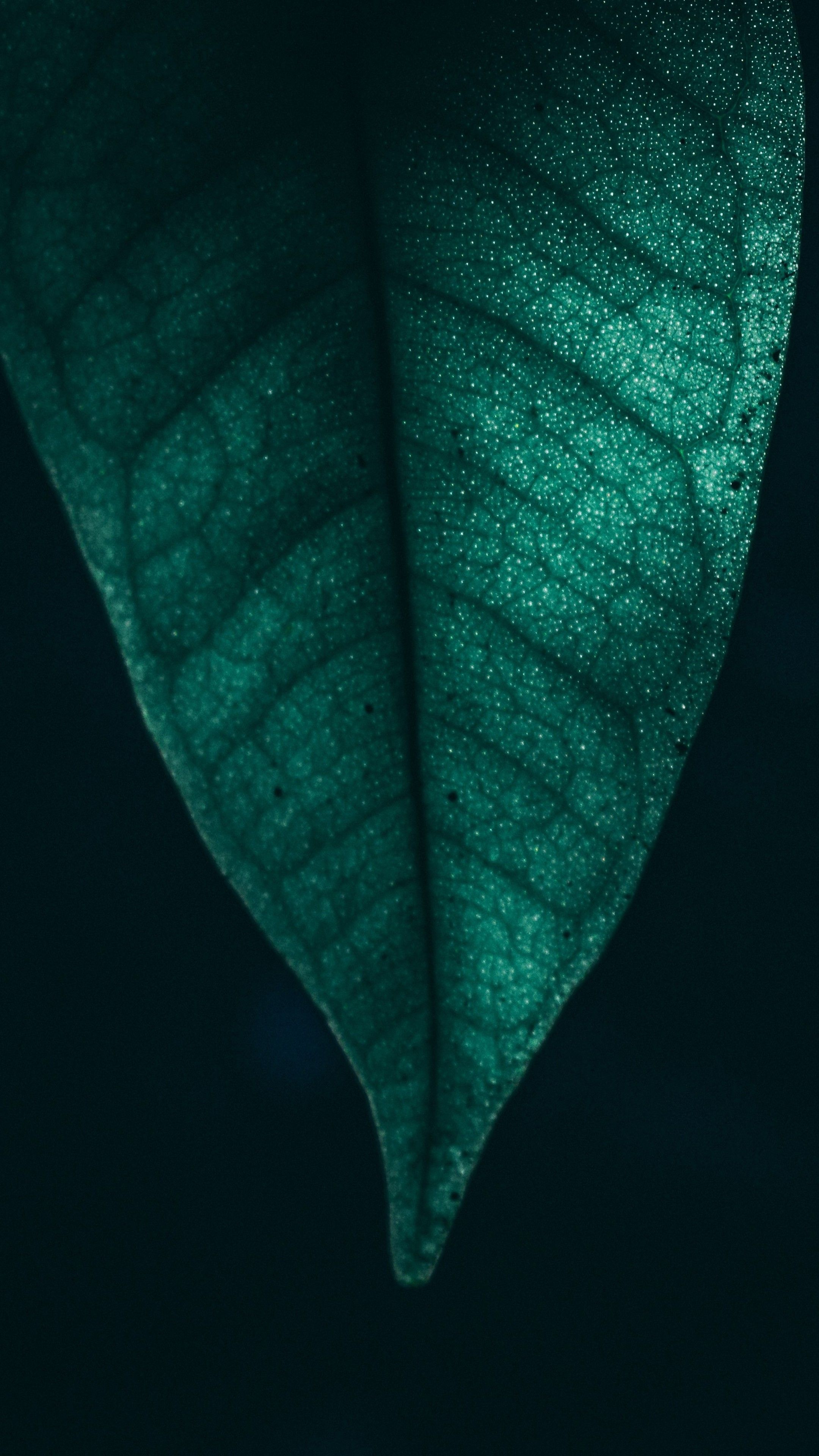 Android Wallpaper - Green Wallpaper 4k For Android , HD Wallpaper & Backgrounds