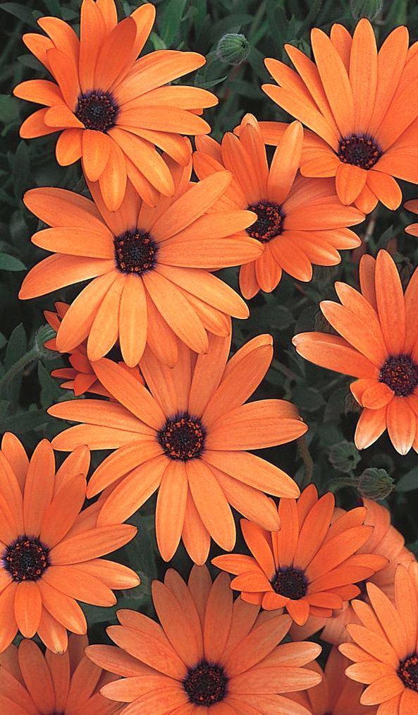 Color Of The Day Orange Flower Wallpaper Iphone - Orange Aesthetic , HD Wallpaper & Backgrounds