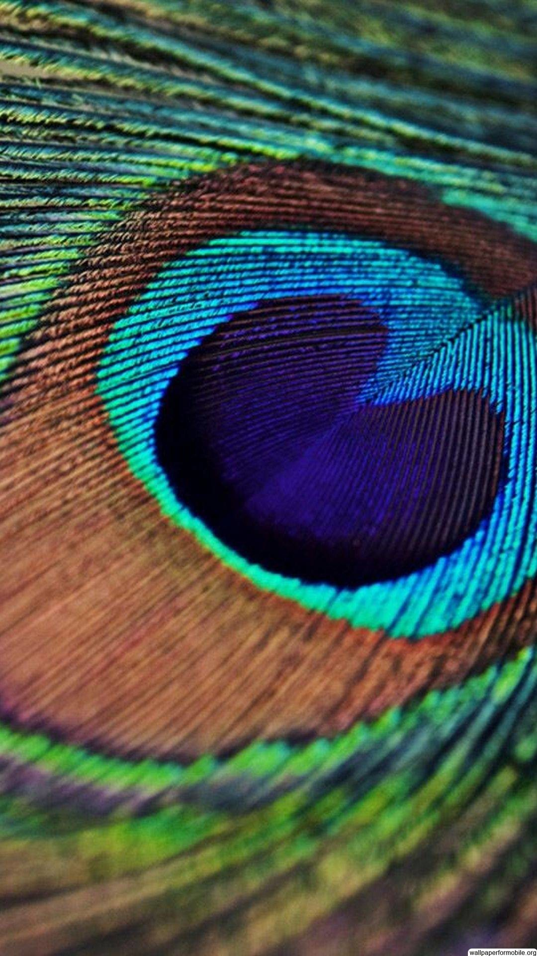 Single Peacock Feather Wallpapers Peacock Feather