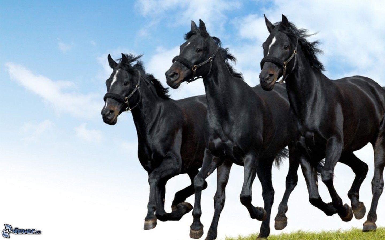Black Horses 600234 Hd Wallpaper Backgrounds Download