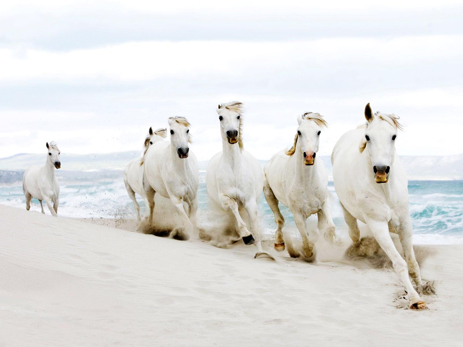 Timeline Running 5 White Horse 600263 Hd Wallpaper