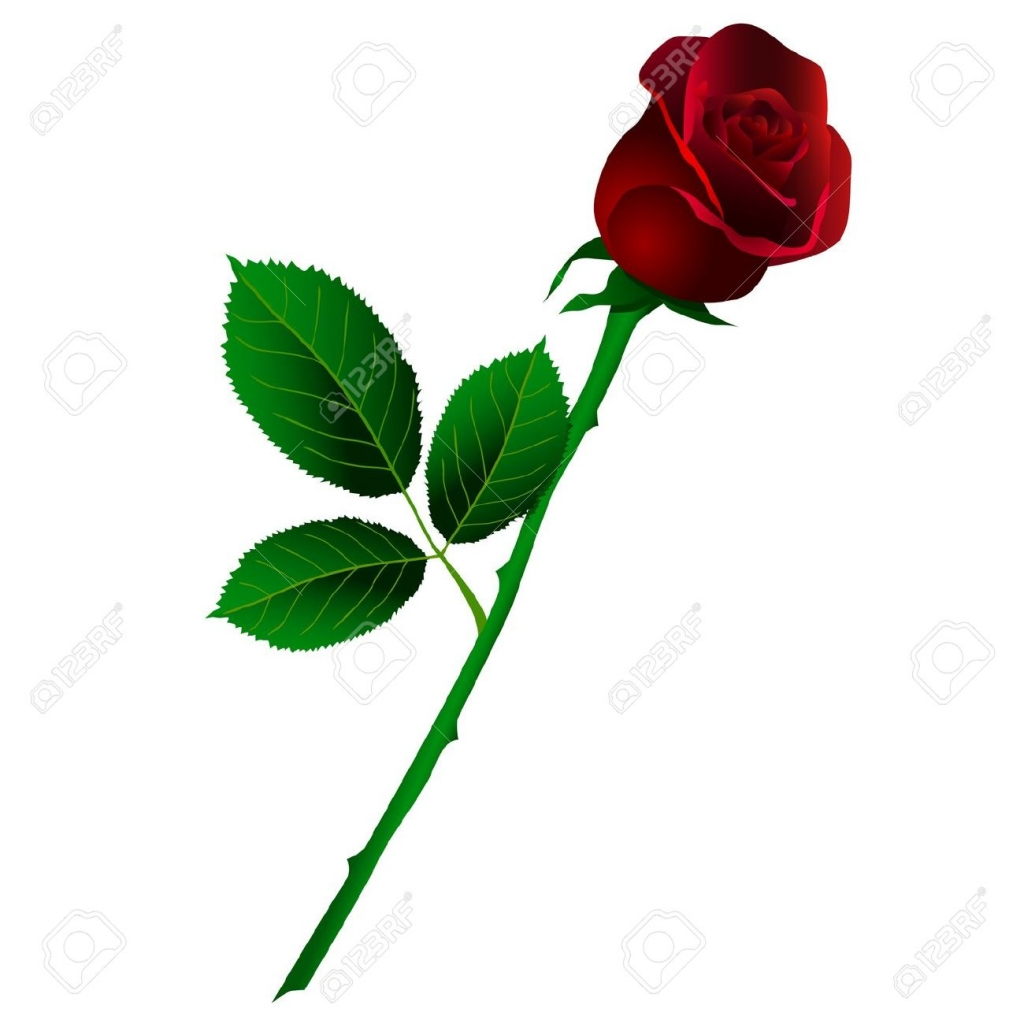 Single Rose Wallpaper Hd 59 Pictures Red Rose Stem Drawing 609547 Hd Wallpaper Backgrounds Download