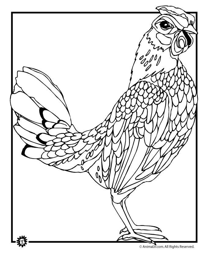 Chicken Coloring Pages Realistic Chicken Coloring Page - Chicken , HD Wallpaper & Backgrounds