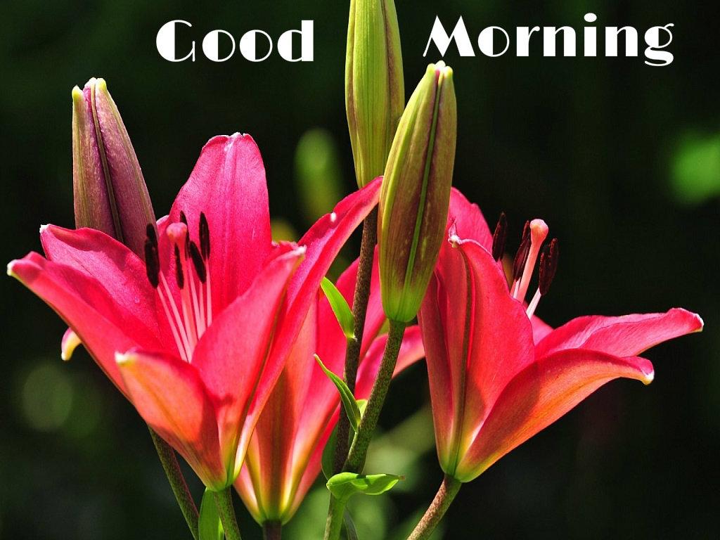 Good Morning Wallpaper Full Hd Flower - Hd Good Morning Flowers , HD Wallpaper & Backgrounds