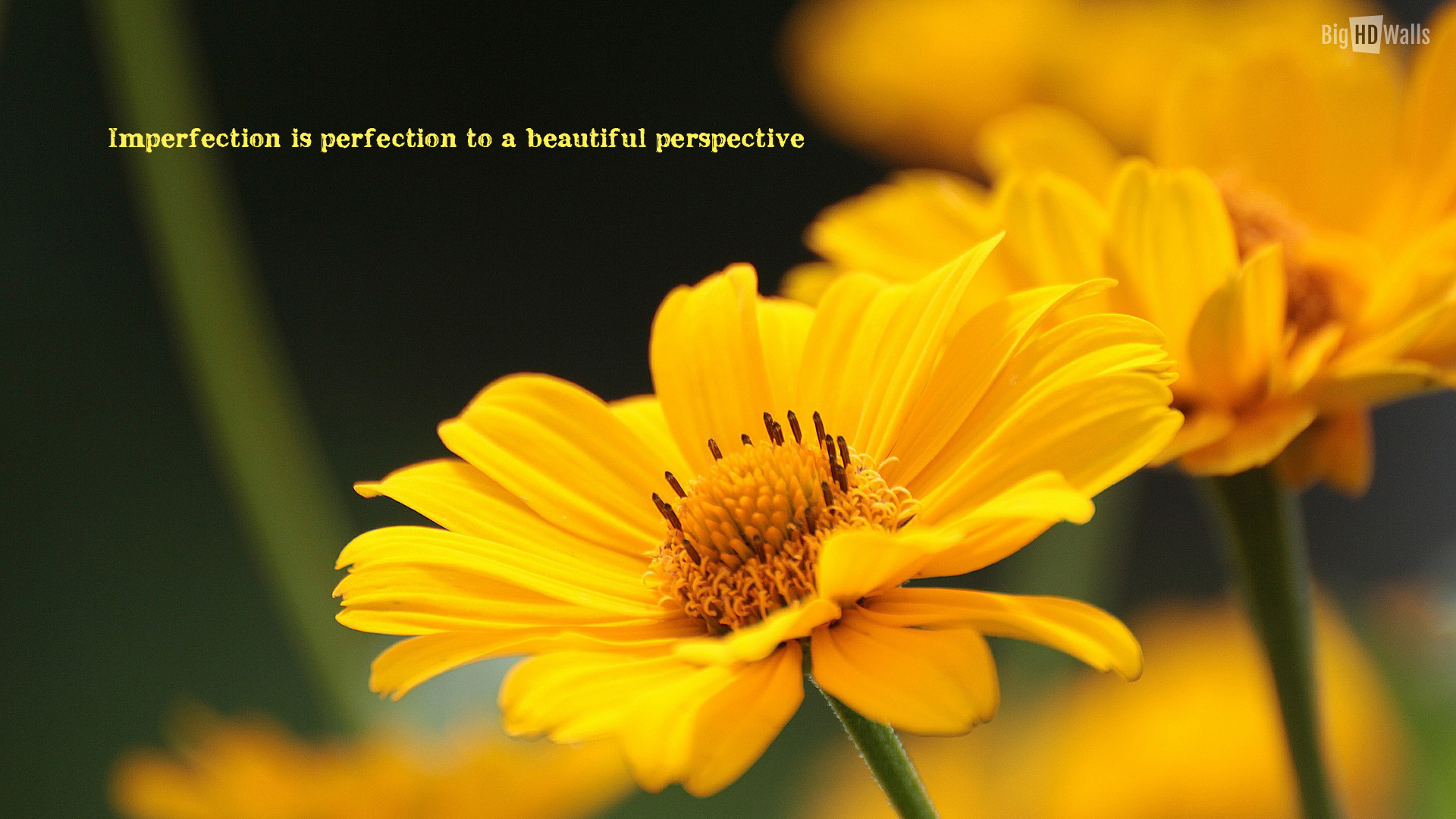 Beautiful Yellow Flower Wallpaper - Quotes On Yellow Flower , HD Wallpaper & Backgrounds