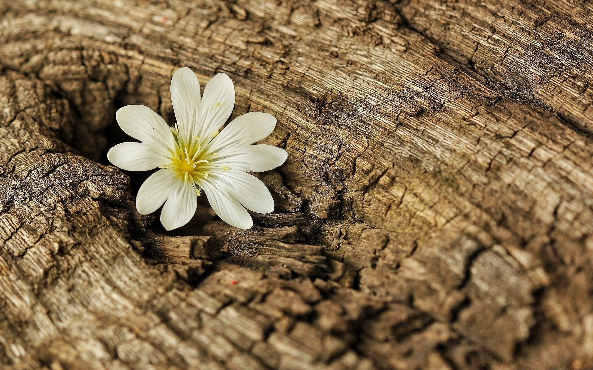 Tree Bark And Flowers , HD Wallpaper & Backgrounds