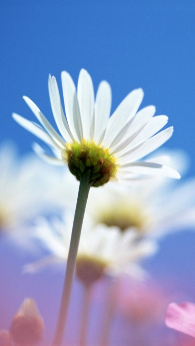 Bright White Flower Iphone Wallpaper - If You Can T Do Anything , HD Wallpaper & Backgrounds