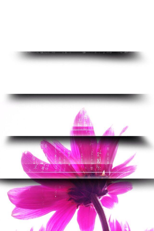 Shelves White Flower Iphone Wallpaper Pinterest Shelves - New Year Wishes 2011 , HD Wallpaper & Backgrounds