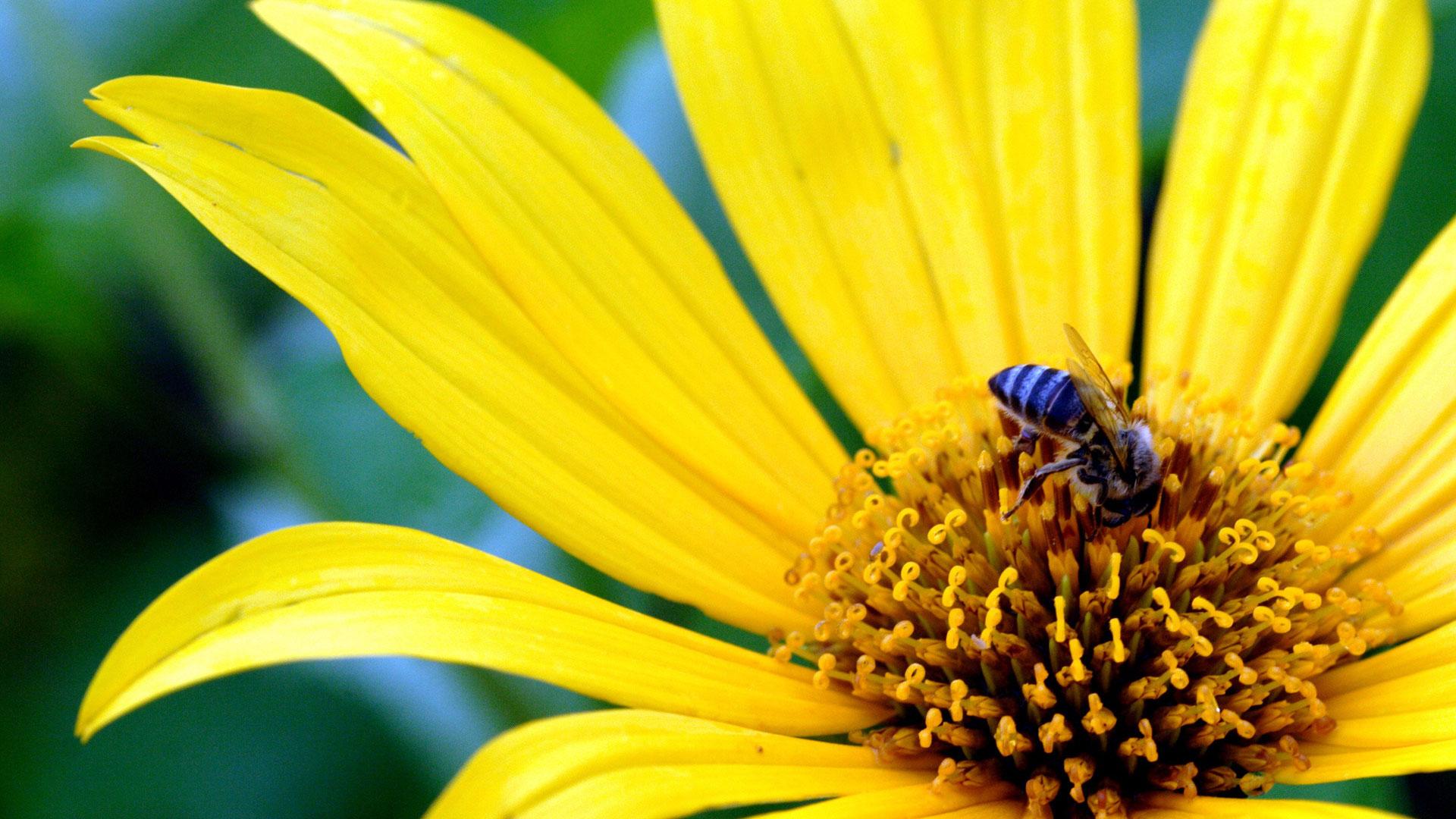 Yellow Flower - Big Size Yellow Flower , HD Wallpaper & Backgrounds