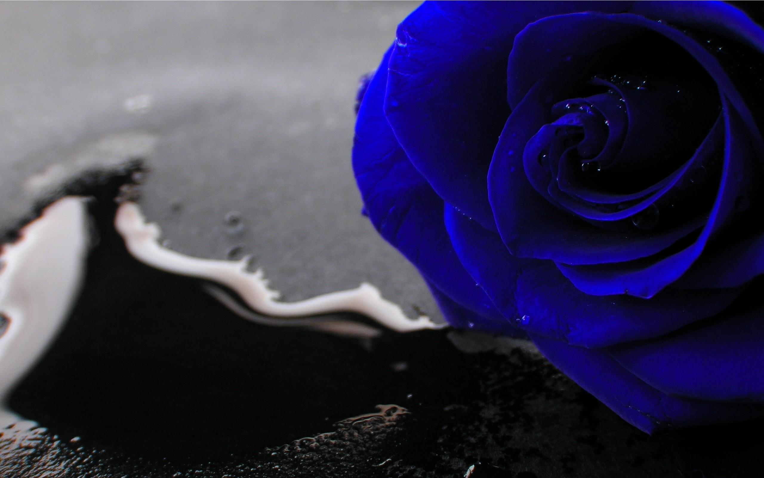 Hd Wallpapers 1080p Blue Rose Full Hd Blue Rose 657941 Hd Wallpaper Backgrounds Download