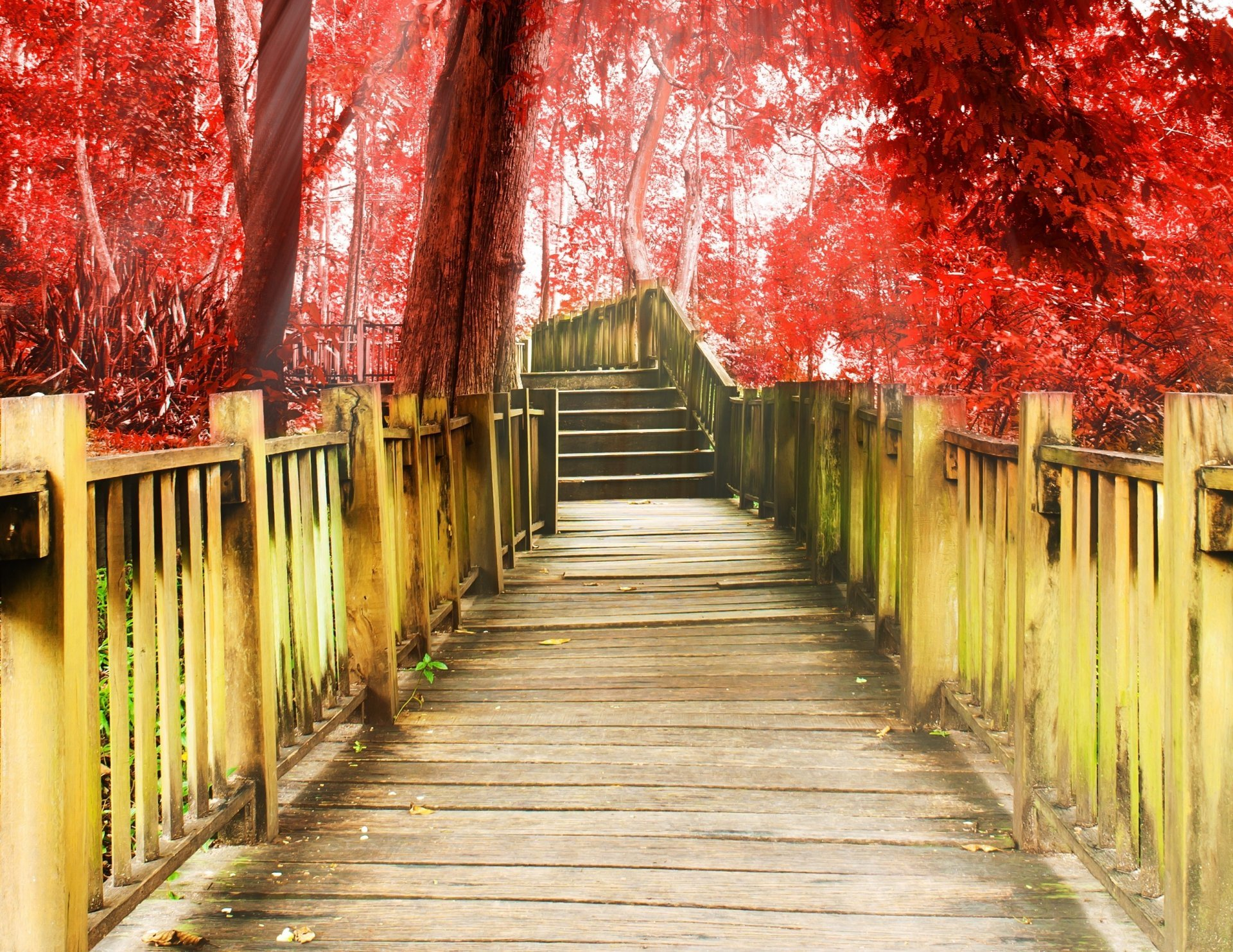 Miscellaneous Track Stairs Degree A Step Tree Red Background - Background Images Hd Full Screen , HD Wallpaper & Backgrounds