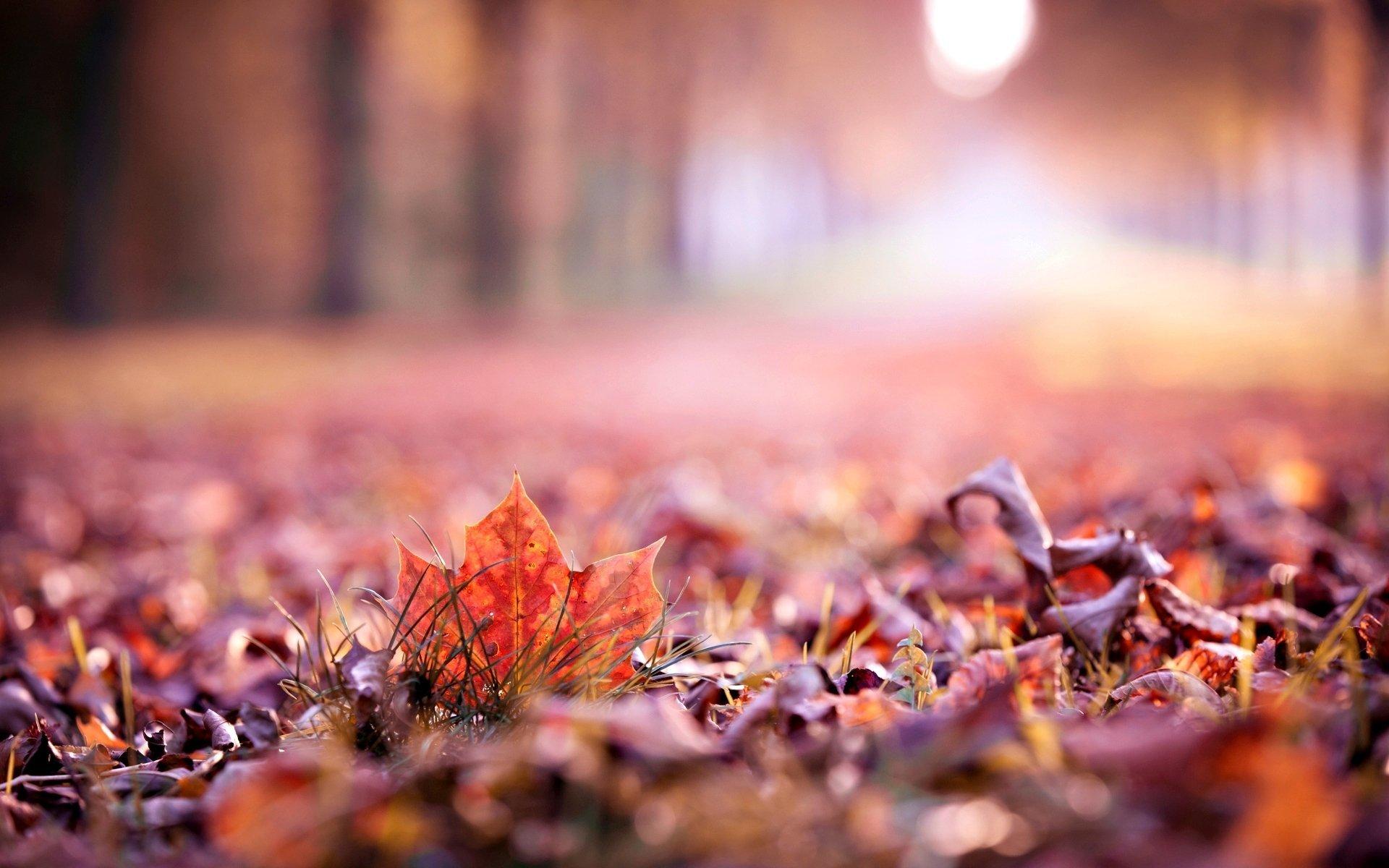 Close Up Autumn Leaves Leaf Leave Macro Blur Beautiful - Fall Leaf Nature , HD Wallpaper & Backgrounds