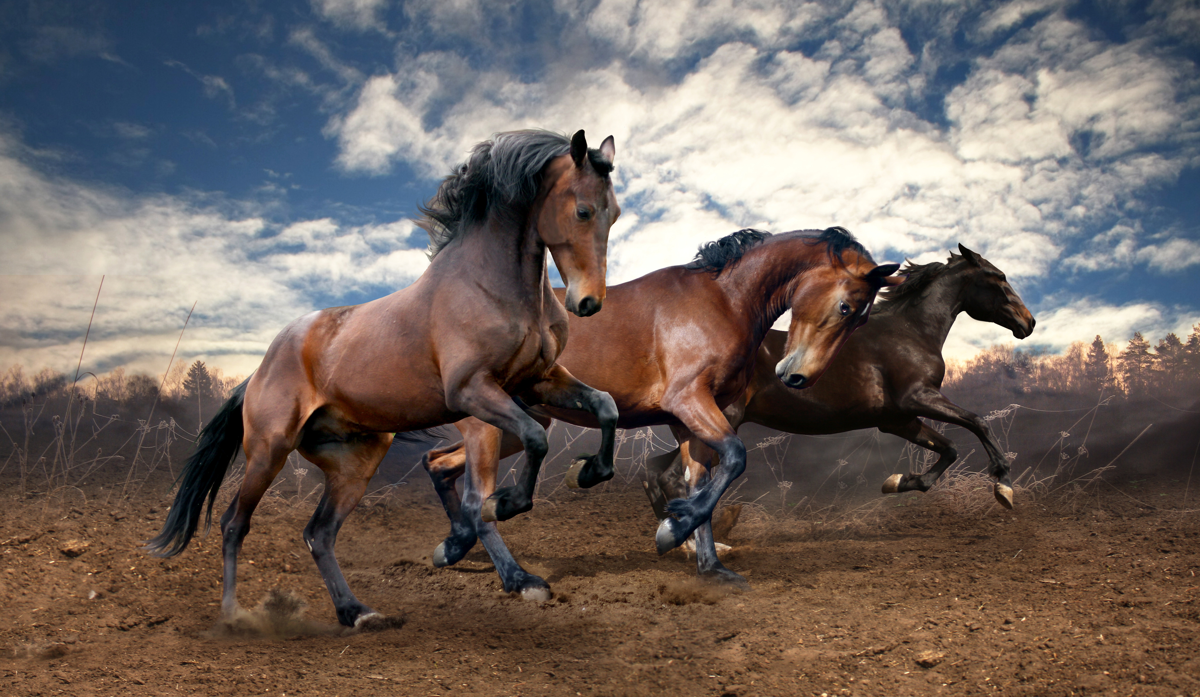 Horse 4k Ultra Hd Wallpaper National Geographic Funny