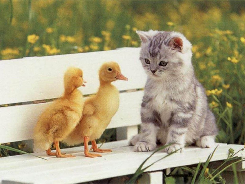 Cute Cats , HD Wallpaper & Backgrounds