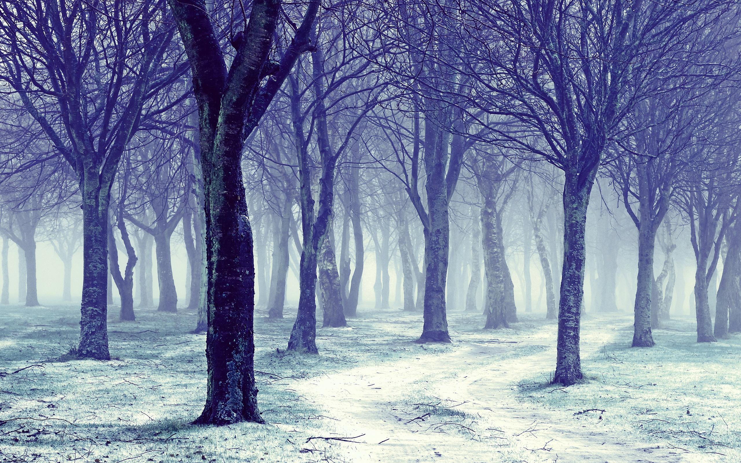 Šuma Hakojano 69-695745_nature-snowy-winter-forest-trees-wallpapers-calvin-and