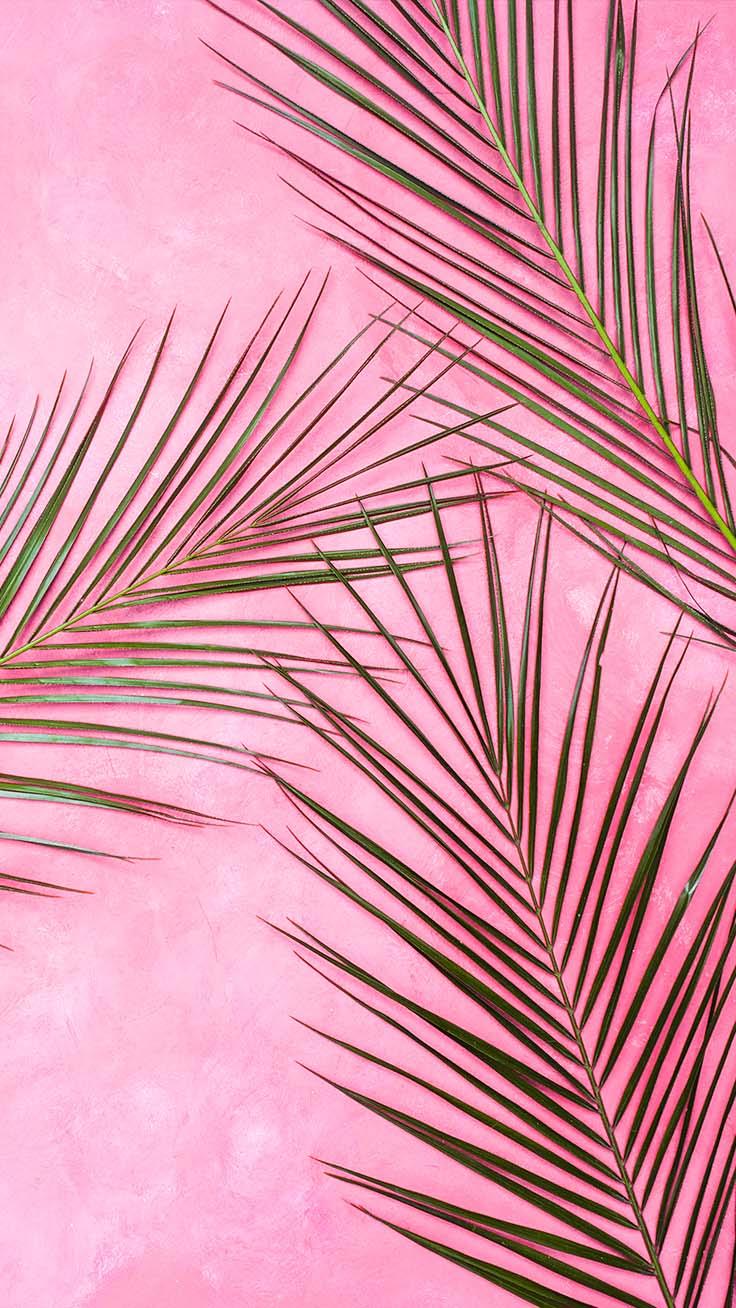 Pink Palm Tree Iphone X Wallpaper Iphone Wallpaper Pink