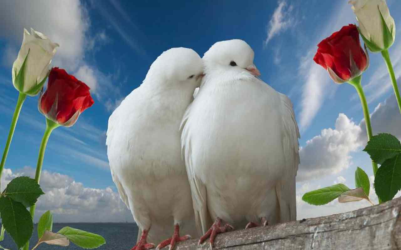 Beautiful Love Wallpaper Free Download 47 Find Hd Wallpapers