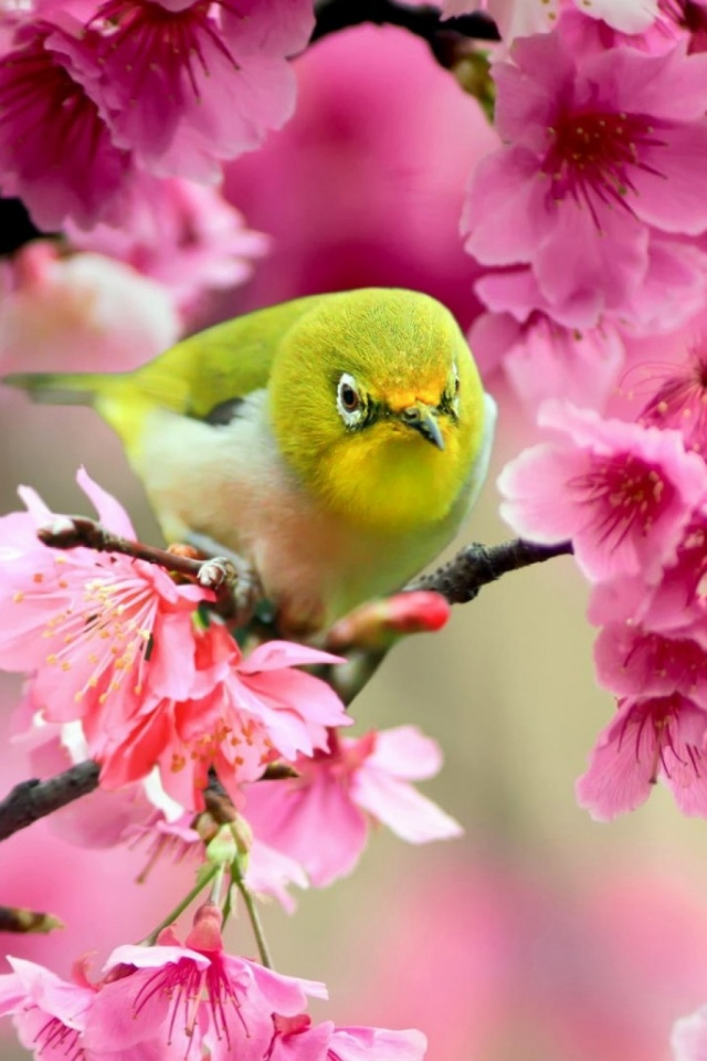 Download Now - Spring Flowers With Birds , HD Wallpaper & Backgrounds