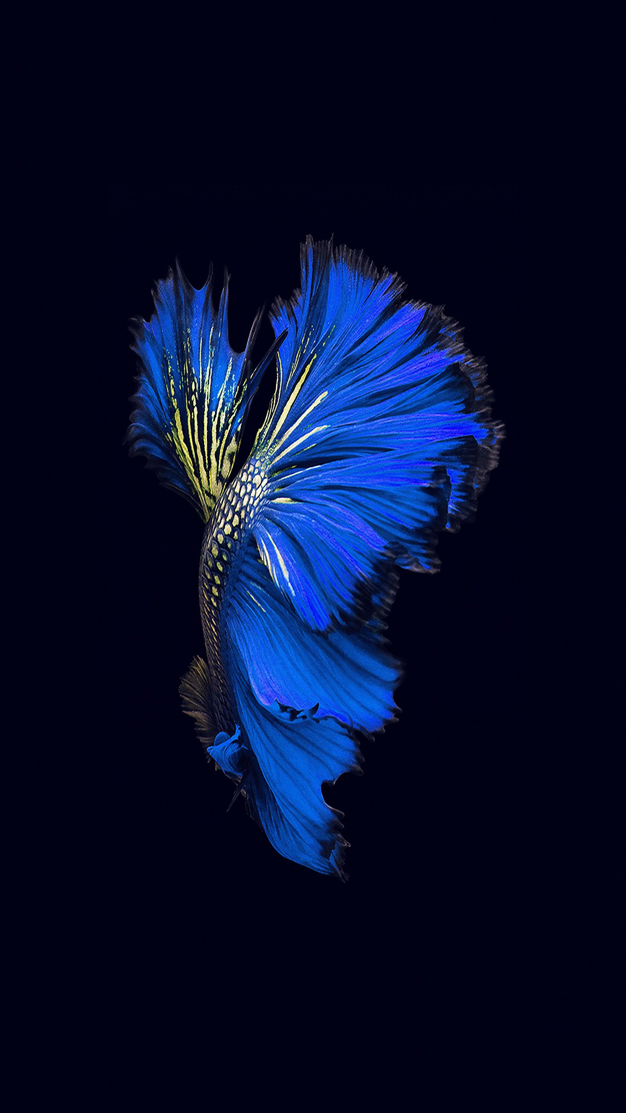 Apple Ios9 Fish Live Background Dark Blue Android Wallpaper