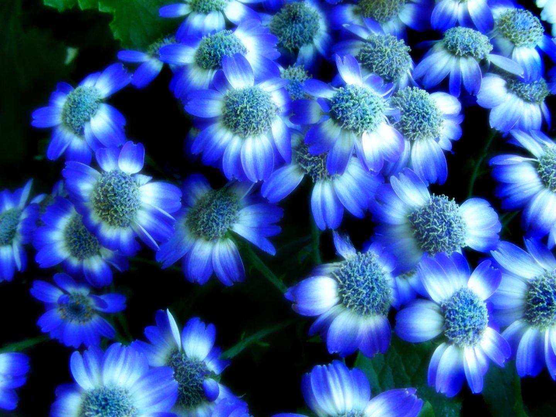 Explore And Share Desktop Wallpaper Flowers High Resolution