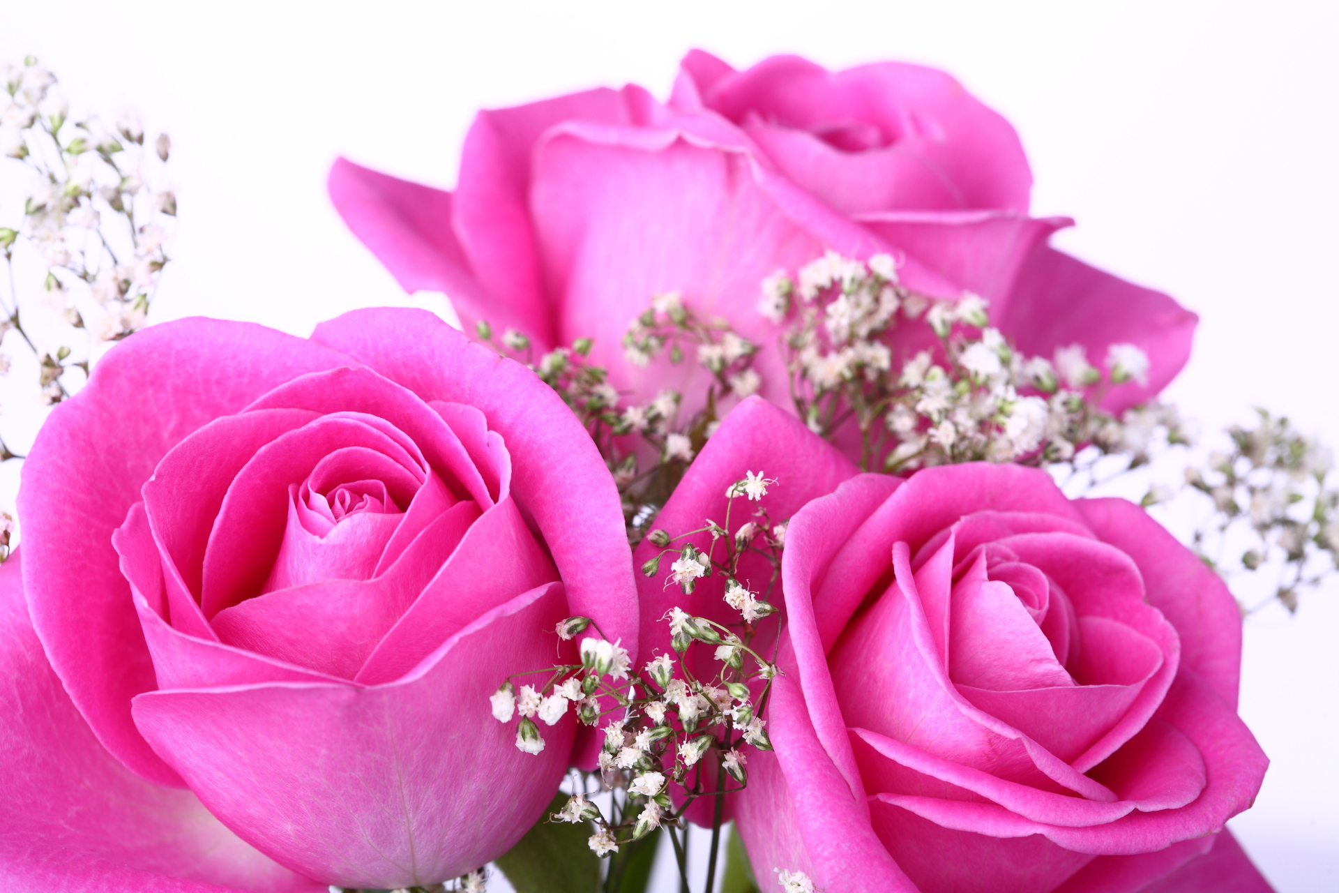 Pink Roses Pictures Hd Wallpapers - Beautiful Pink Rose Flowers , HD Wallpaper & Backgrounds