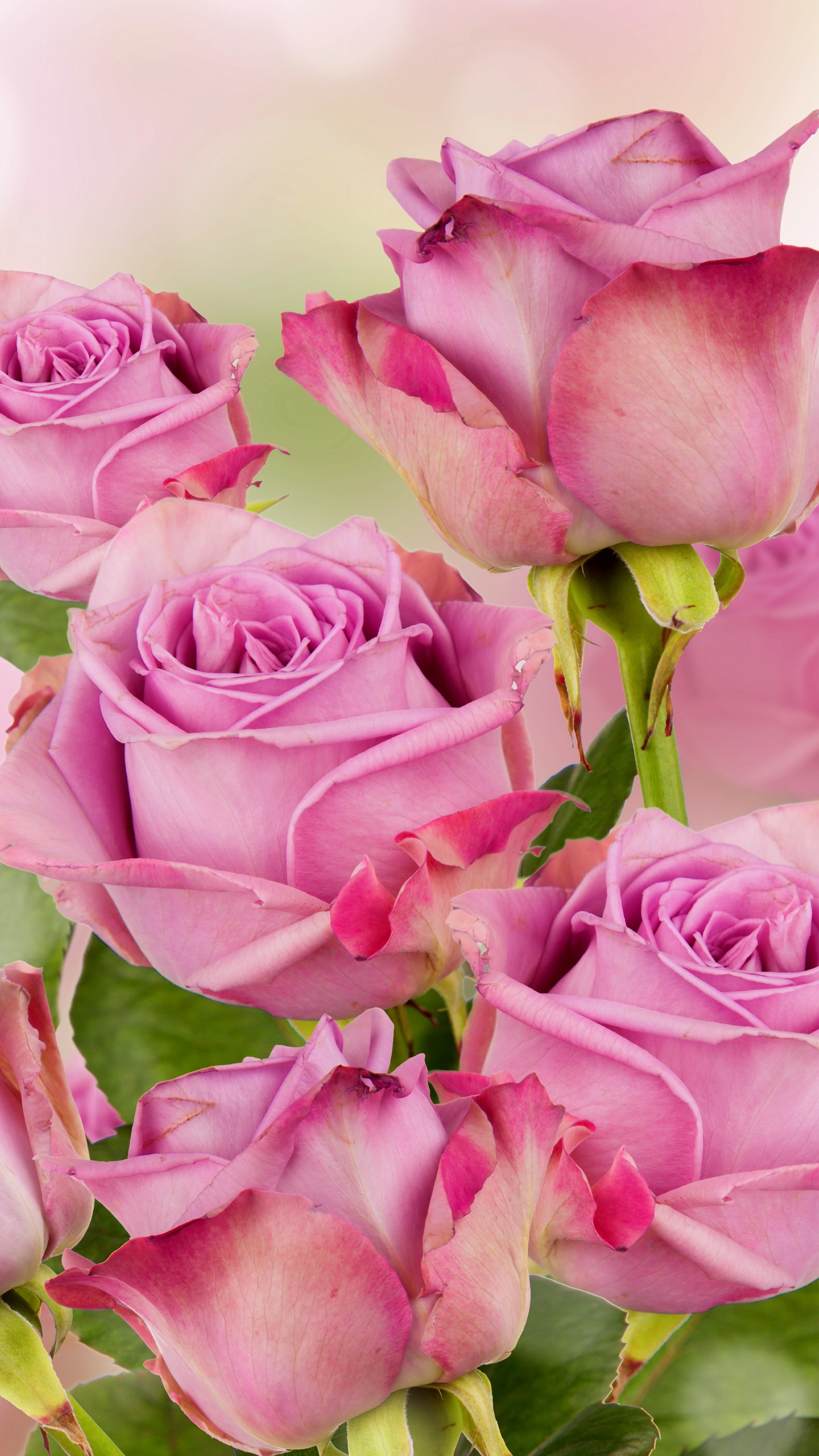 Flowers Pink Roses Wallpaper Happy New Year Beautiful 710931