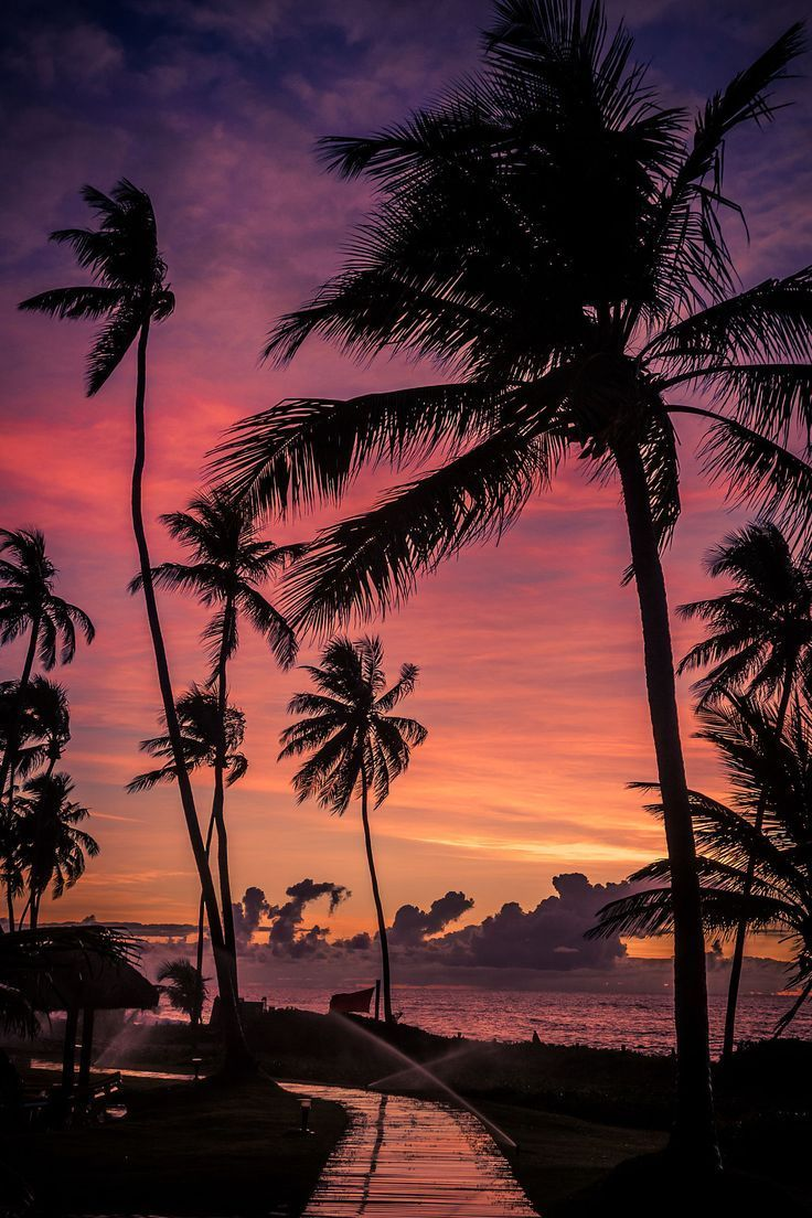 Image Result For Sunset With Palm Trees Tumblr Night - Sunset Palm Trees , HD Wallpaper & Backgrounds