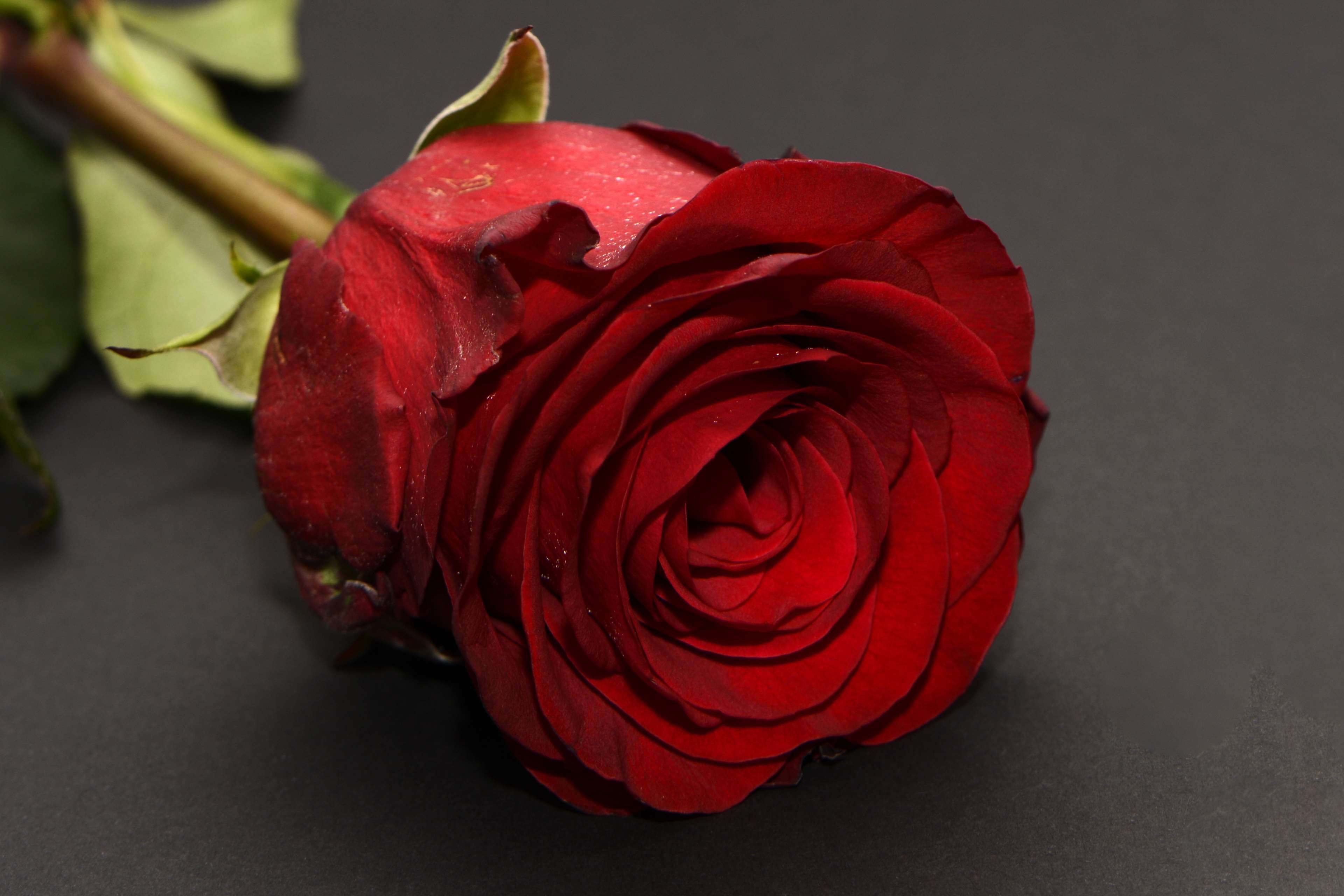 Red Roses Hq Wallpaper Wide Love Romantic Rose Flowers 737609 Hd Wallpaper Backgrounds Download