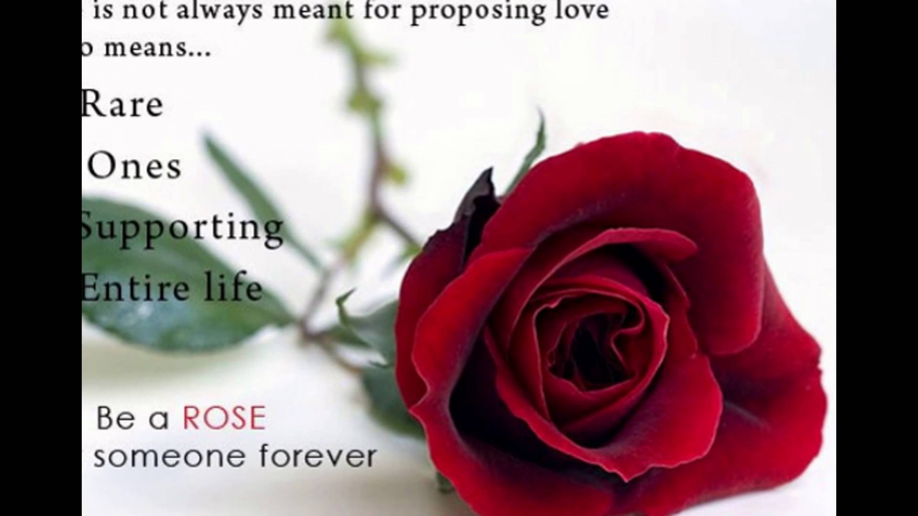 Rose Day 15 Status Fb Whatsapp Timeline Cover Images - Rose Flower With Quotes , HD Wallpaper & Backgrounds