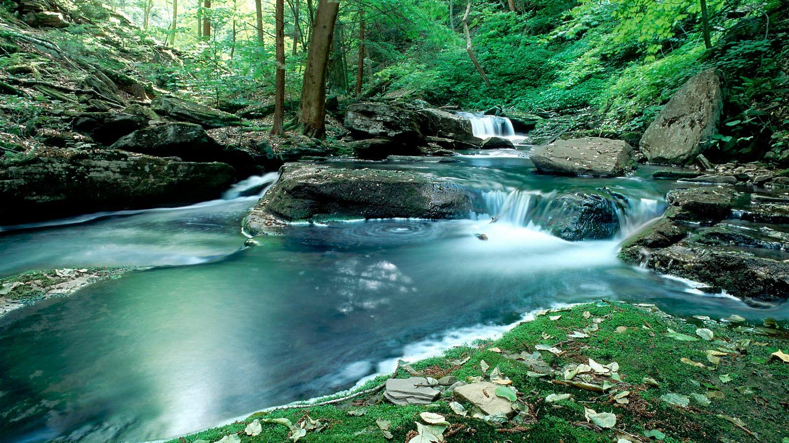 Free Nature Wallpaper , HD Wallpaper & Backgrounds