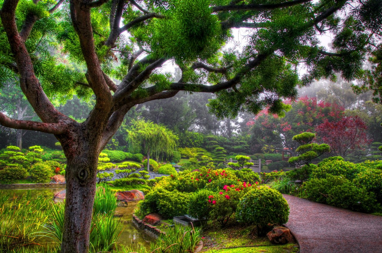Nice Trees Bushes Pretty Greenery Garden Nature Lovely Forest