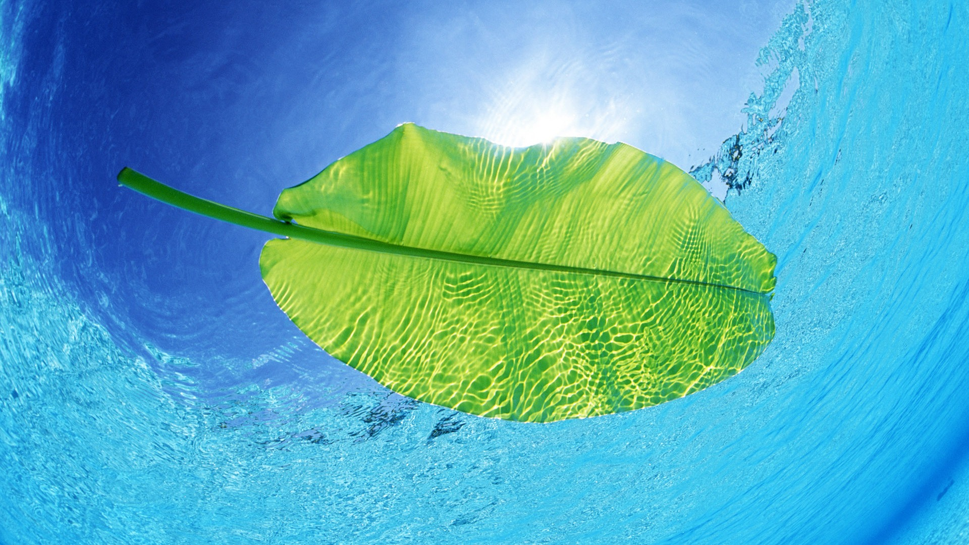 Swimming Leaf Wallpaper Other Nature Wallpapers Ultra Hd