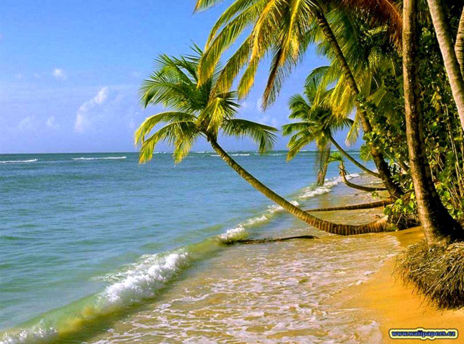 Download 3d Nature Hd Wallpaper For Desktop Full Size - Beach Wallpaper Gif Hd , HD Wallpaper & Backgrounds
