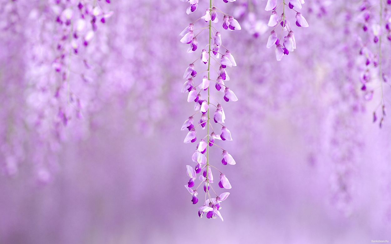 Peace Of Mind Images To Calm The Soul - Purple Covers For Facebook , HD Wallpaper & Backgrounds