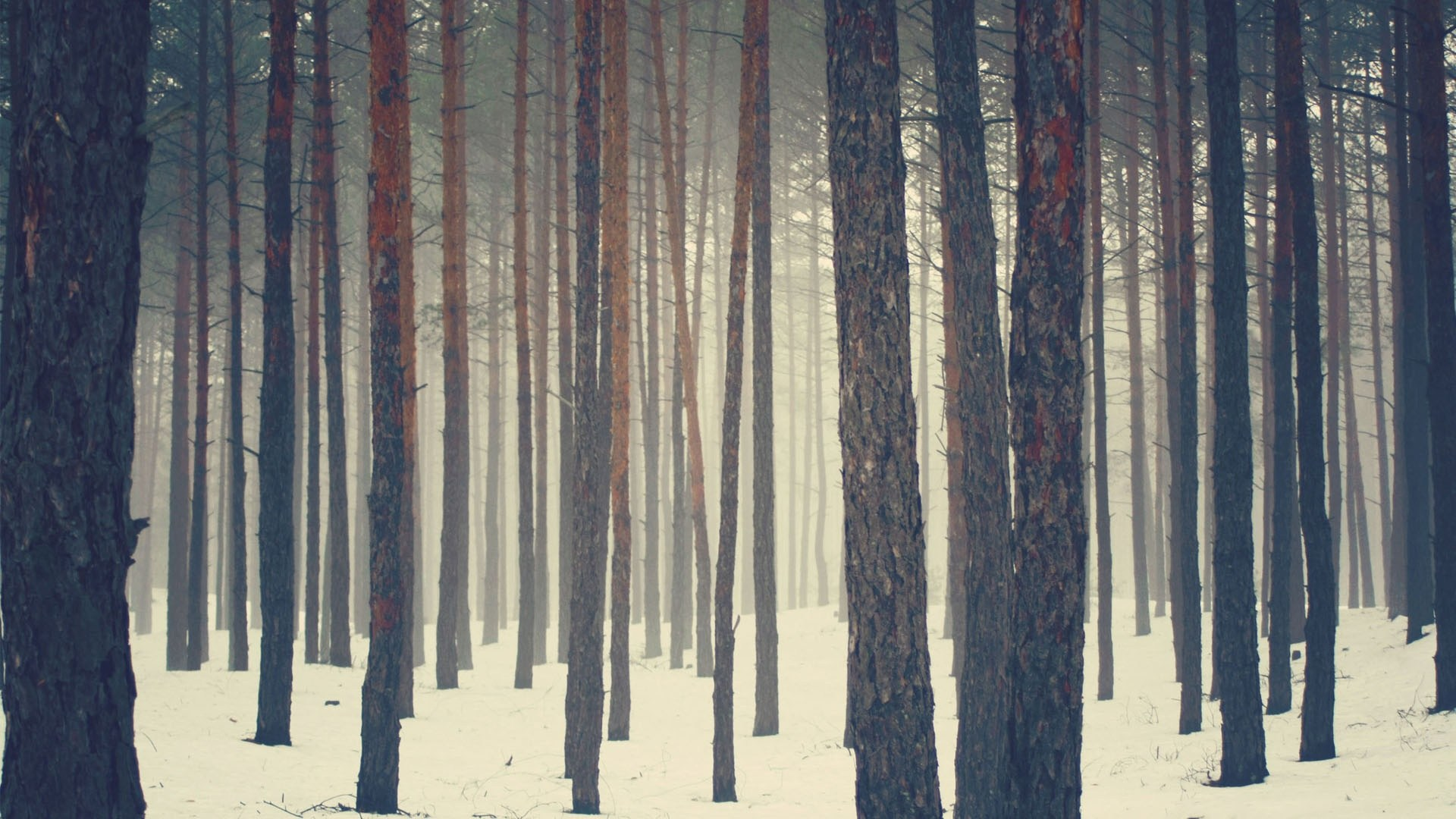 Sweden Wallpaper Forest Hd Desktop Wallpapers 4k Hd Deeper Jungle Rinse Fm 799785 Hd Wallpaper Backgrounds Download