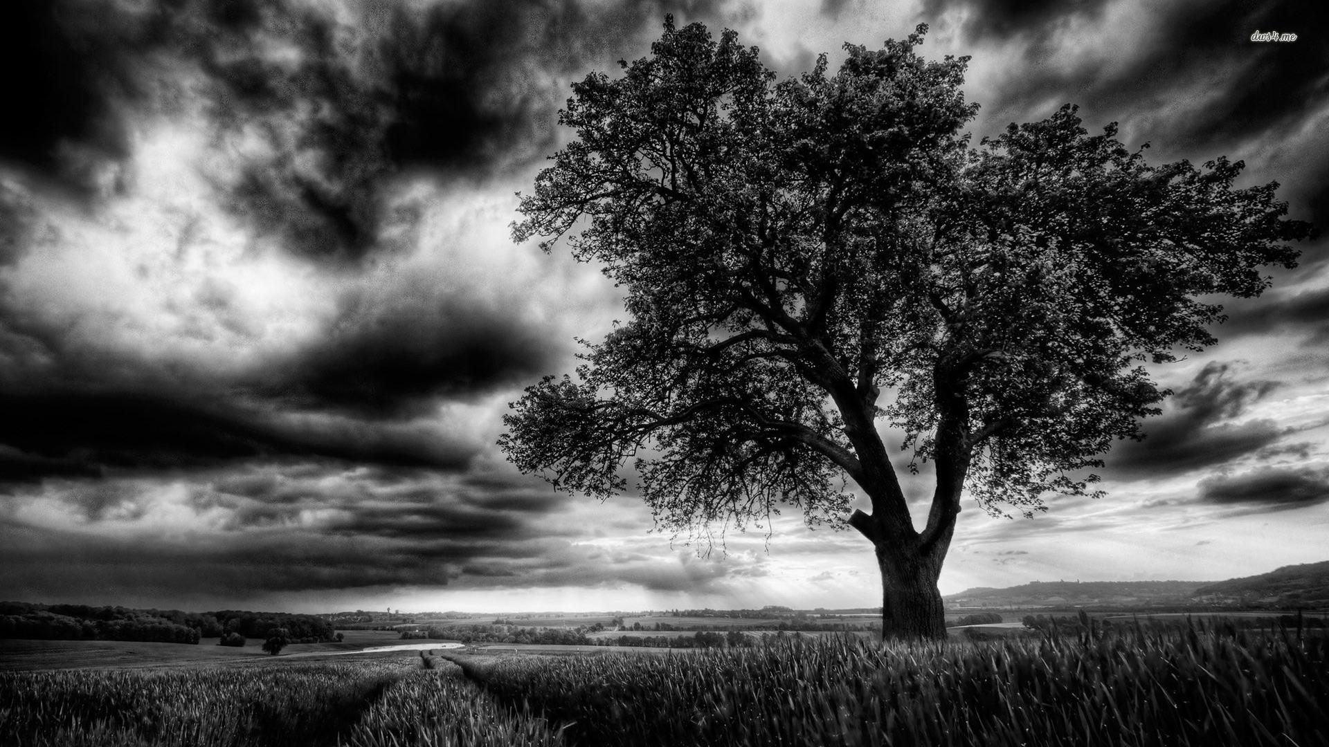 Dark Tree On The Field Wallpaper - Dark Tree Wallpaper Hd , HD Wallpaper & Backgrounds