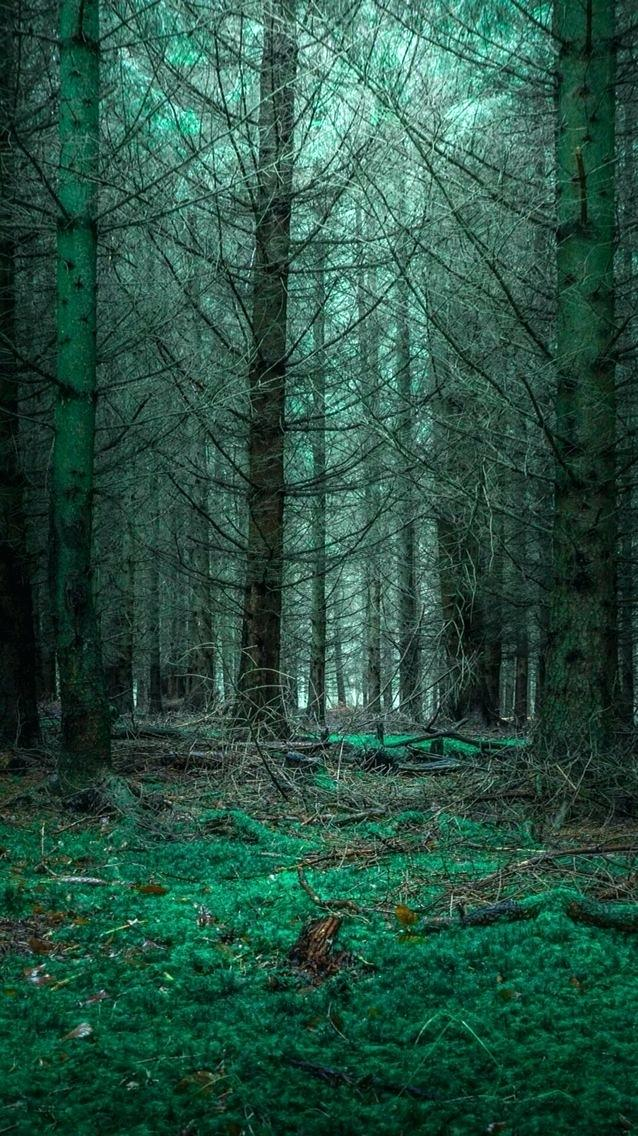 79 799964 3d nature live wallpaper for android mysterious forest