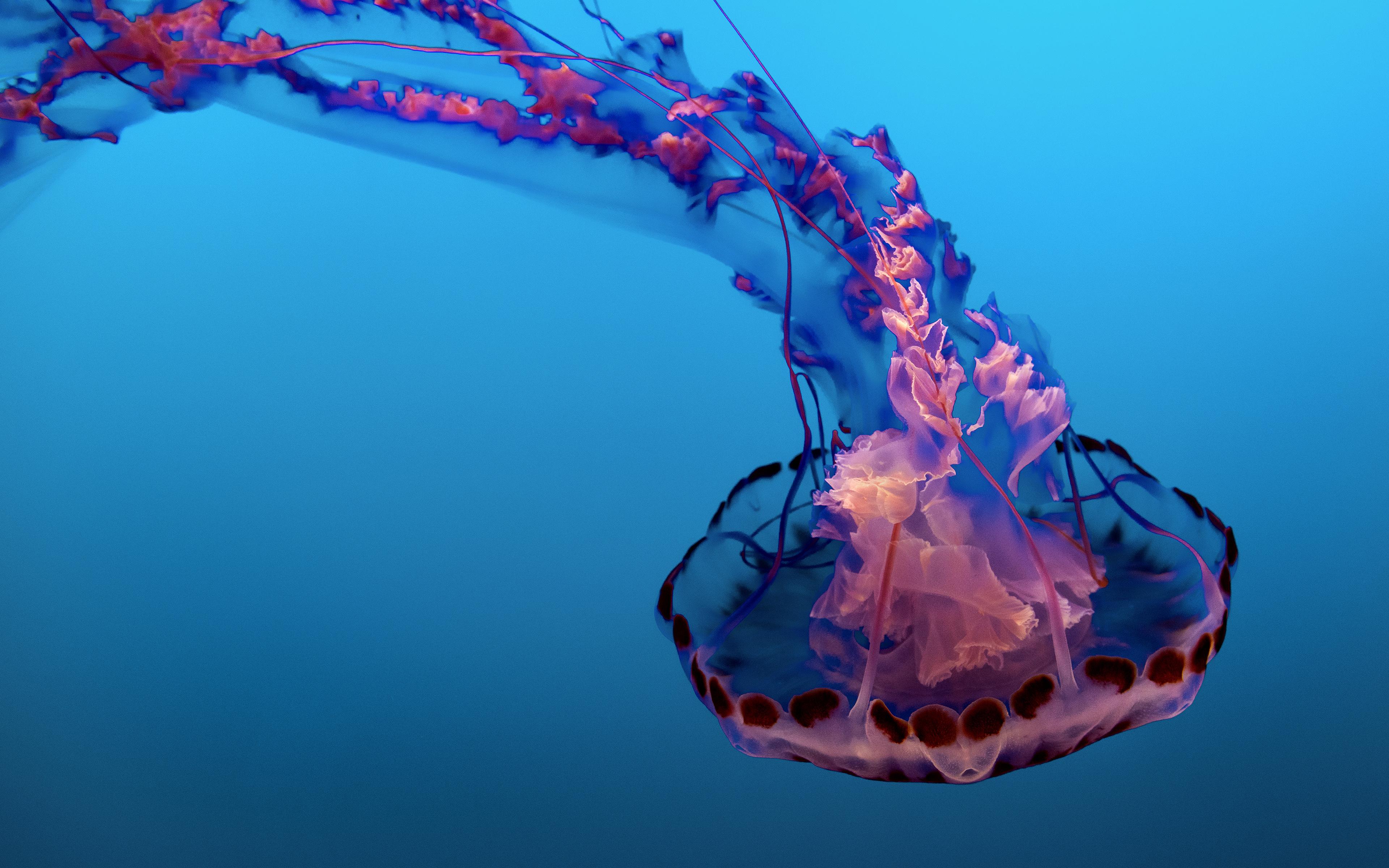 Underwater Jellyfish 4k 8k Sea Life 80384 Hd